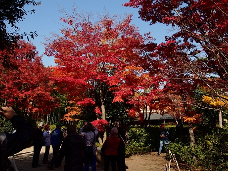 2013-11-18-2紅葉-1-10%.jpg