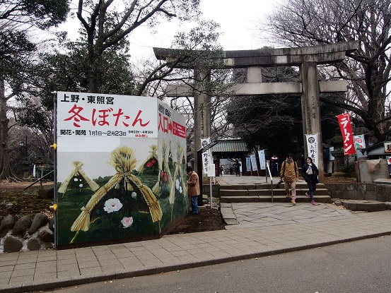 2014-01-25-1冬牡丹-12%.jpg