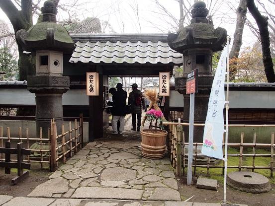 2014-01-25-2冬牡丹-12%.jpg