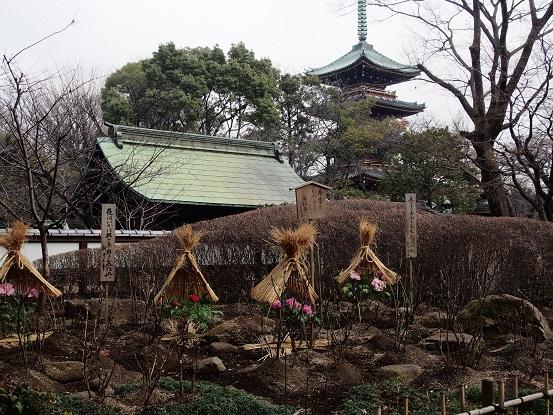 2014-01-25-6冬牡丹-12%.jpg
