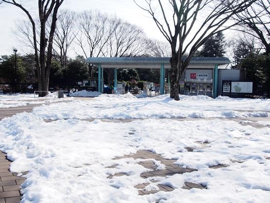 2014-02-19-1神代植物公園-1-12%.jpg