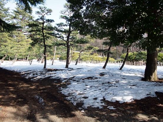 2014-02-19-4神代植物公園-4-12%.jpg