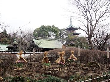 2014-05-07-12-2参考14-01-25牡丹苑内-8%.jpg