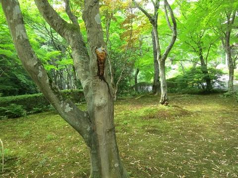 2014-05-25-6常照寺庭園-2-12%.jpg