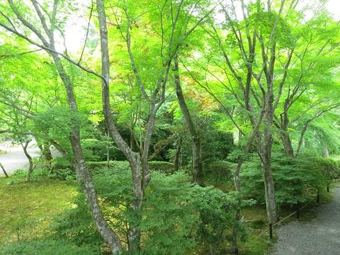 2014-05-25-7常照寺庭園-3-12%.jpg
