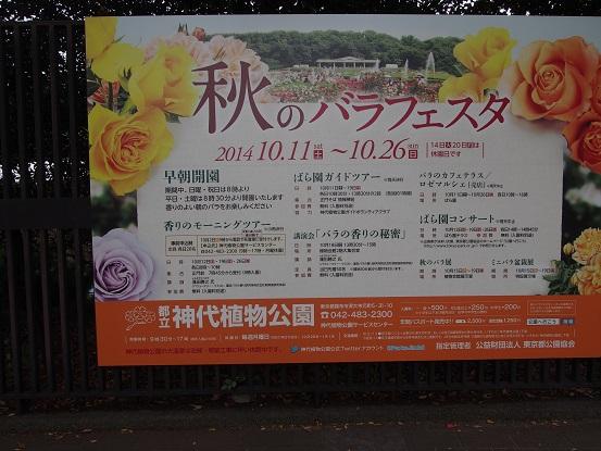 2014-10-11-0薔薇フェスタ―案内-12%.jpg