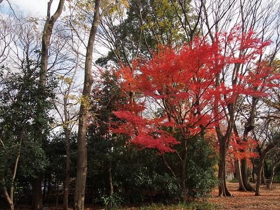 2014-12-21-14紅葉-1-12%.jpg