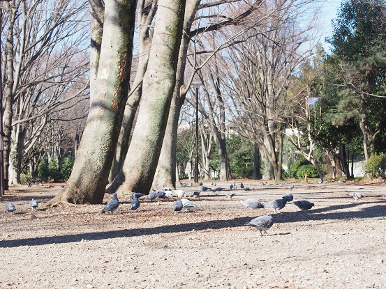 2015-01-09-2公園-1-12%.jpg