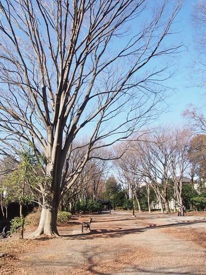2015-01-09-3公園-2-12%.jpg