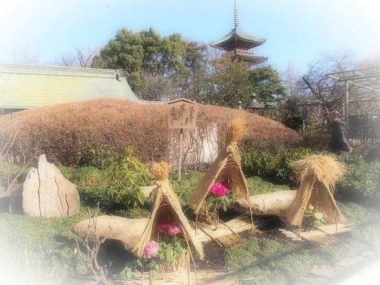 2015-01-11-10牡丹苑12%.jpg