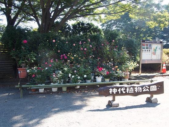 2015-10-25-3神代植物公園入口正面-12%.jpg