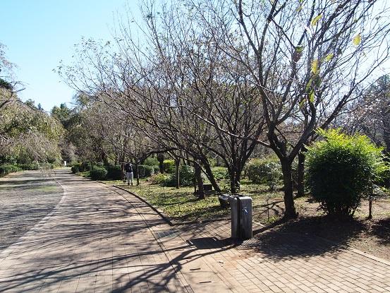 2015-10-25-4十月桜の場所-12%.jpg