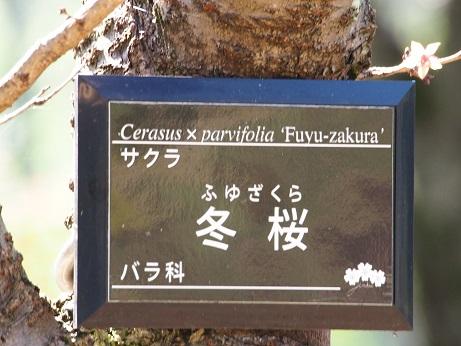 2015-10-25-9冬桜名札-10%.jpg