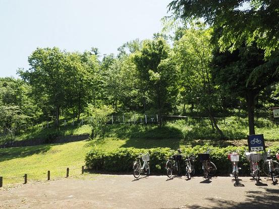 2015-5-13-1浅間山ムサシノキスゲ-12%.jpg
