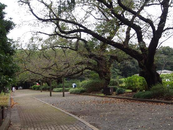 2016-10-10-17桜並木-12%.jpg