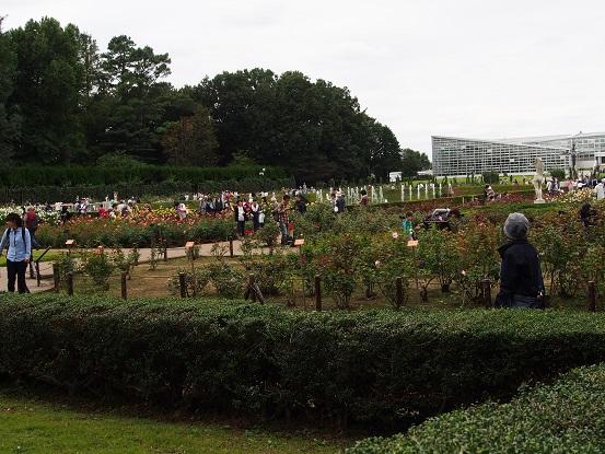 2016-10-10-8薔薇園-1-12%.jpg