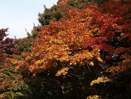 2016-11-20-12紅葉-6-12%.jpg