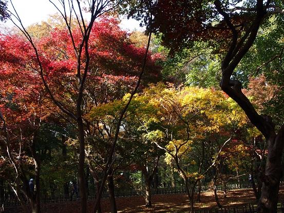2016-11-20-22紅葉-13-12%.jpg