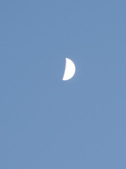 2016-11-7-2上弦の月-12%.jpg