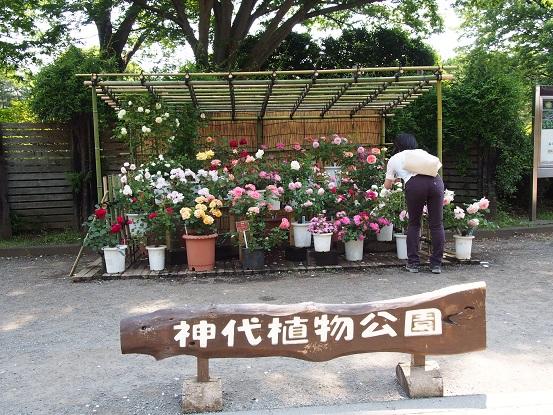2016-5-22-1神代植物公園正門前-12%.jpg