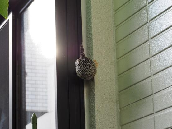 2016-8-30-1-1ハチの巣-1-12%.jpg