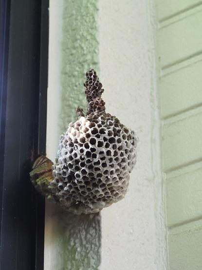 2016-8-30-2ハチの巣-2-12%.jpg