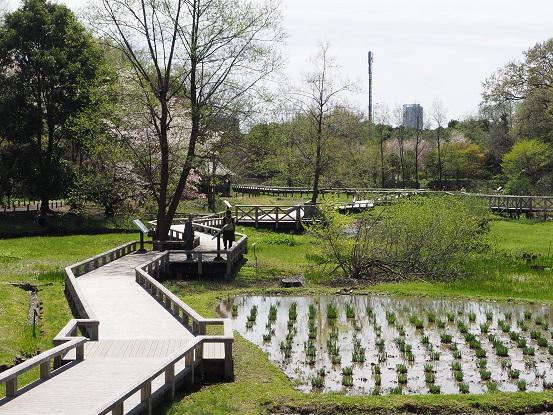 2017-4-12-1水生植物園-12%.jpg