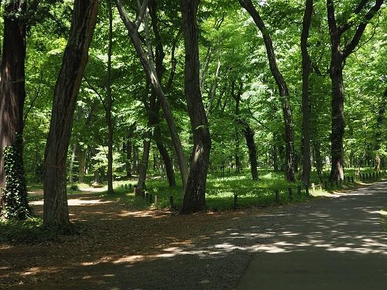 2017-4-28-5神代植物公園本園-12%.jpg