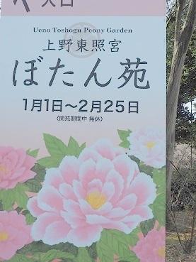 2018-1-15-1冬牡丹ポスター-8%.jpg