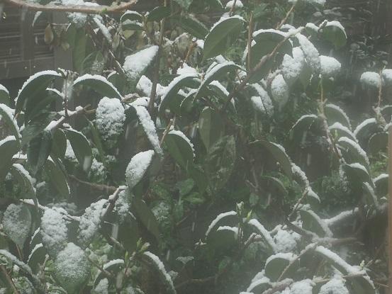 2018-3-21-2彼岸の雪-12%.jpg