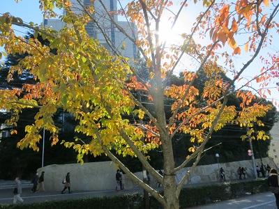 2013-11-30-1澁谷紅葉-1-10%.jpg