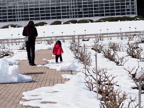 2014-02-19-10薔薇園-2-12%.jpg