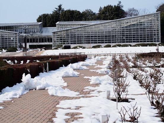2014-02-19-9温室へ-12%.jpg