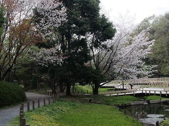 2014-04-09-1水生植物園-1-12%.jpg